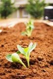 trädgård som planteras nytt arkivfoto