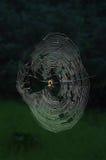 Trädgård-spindel Orbrengöringsduk som tänds av solen Arkivbild