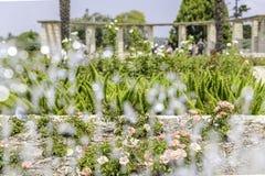 Trädgård till och med vattenstrålar Arkivbild