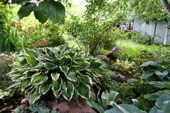 Trädgård Trädgårds- bygd Trädgårds- härliga fält för pion av ranunculusen som är fullvuxna i söderna arkivbilder