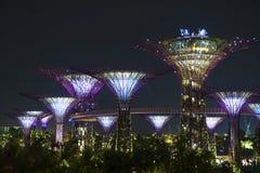 Trädgård vid fjärden Singapore Arkivfoton