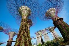 Trädgård vid fjärden, Singapore Arkivfoton
