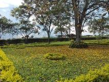trädgårdar Royaltyfri Bild