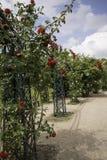trädgårdar arkivbild