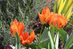 trädgårdar Royaltyfria Foton