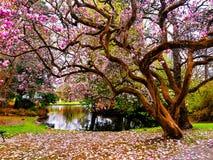 trädgårdar Fotografering för Bildbyråer