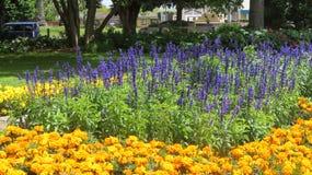 Trädgårdar av blommor Arkivfoto