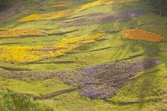 Trädgårdar för för Trauttmansdorff slottMerano Italien blommor och orkidér Arkivbilder