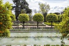 Trädgårdar i Alcazar av den Cordoba staden spain Royaltyfri Bild