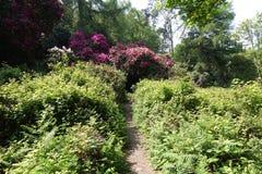 Trädgårdar i hjortar parkerar, Dublin, Irland Arkivfoto