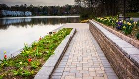 Trädgårdar längs Wilde sjön, i Columbia, Maryland Arkivbild