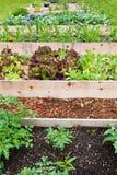 trädgårdar lyftte grönsaken Royaltyfria Foton