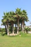 Trädgårdar nära den Ayia Napa stranden, Cypern Royaltyfri Bild