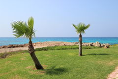 Trädgårdar nära den Ayia Napa stranden, Cypern Royaltyfria Foton
