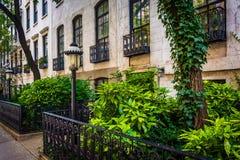 Trädgårdar och radhus längs den 23rd gatan i Chelsea, Manhattan, Arkivbilder