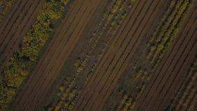 Trädgårdar på jord Skott på surret lager videofilmer