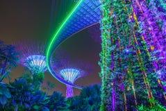 Trädgårdar vid de stora träden för fjärd på natten Singapore Asien arkivfoton