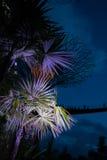 Trädgårdar vid den fjärd@ natten arkivfoton