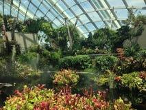 Trädgårdar vid fjärden Royaltyfri Foto