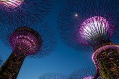 Trädgårdar vid fjärden i Singapore royaltyfria foton
