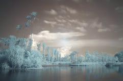 Trädgårdar vid fjärden, infrared, lång exponering Arkivfoto