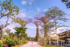 Trädgårdar vid fjärden, Singapore Arkivbild