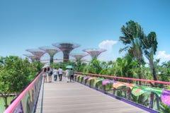 Trädgårdar vid fjärden, Singapore Arkivfoto