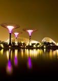 Trädgårdar vid fjärden Singapore Royaltyfri Foto