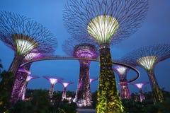 Trädgårdar vid fjärden, Singapore Royaltyfria Bilder