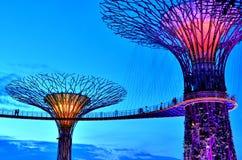 Trädgårdar vid fjärden Supertrees, Singapore Arkivbild