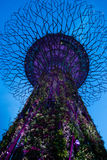 Trädgårdar vid fjärdmonsterträdet fotografering för bildbyråer