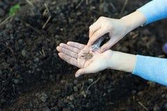 Trädgårdarbeten fungerande barn för trädgårds- kvinna Sunda Lifesty Royaltyfria Bilder