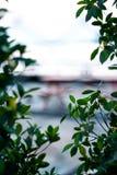 trädgårdbakgrundssuddighet och bokeh Grön bakgrund arkivfoto
