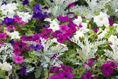 Trädgårdblommor. Fotografering för Bildbyråer