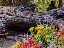 Trädgårdblommor Arkivfoto
