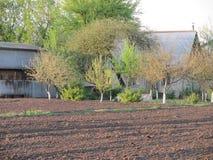 Trädgårdblomningar Fotografering för Bildbyråer