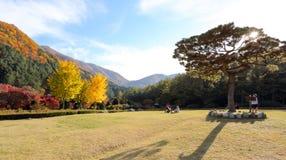 Trädgården av morgonstillhet Royaltyfri Fotografi