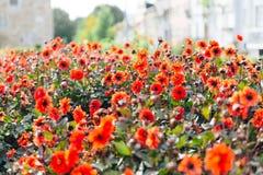 Trädgården av Santa Barbara tillsammans med den östliga vingen av den historiska slotten för ärkebiskop` s Färgrika blommor under Royaltyfri Fotografi