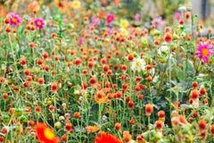 Trädgården av Santa Barbara tillsammans med den östliga vingen av den historiska slotten för ärkebiskop` s Färgrika blommor under Royaltyfri Bild