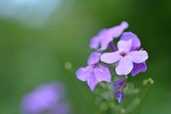 Trädgården blommar bakgrund Royaltyfri Foto