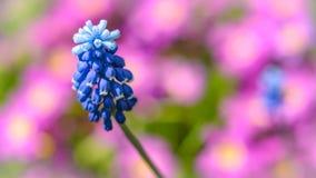 Trädgården blommar i vår Royaltyfria Bilder
