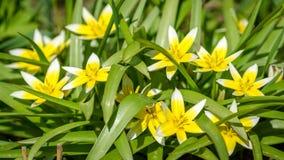 Trädgården blommar i vår Fotografering för Bildbyråer