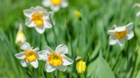 Trädgården blommar i vår Arkivbilder