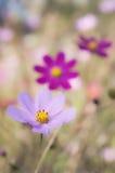 Trädgården blommar på våren Fotografering för Bildbyråer