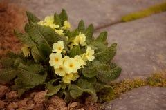 Trädgården blommar på våren tid Royaltyfria Foton