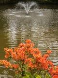 Trädgården blommar sjöspringbrunnen Arkivfoto