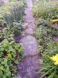 trädgården blommar sommar för grönt gräs arkivbild