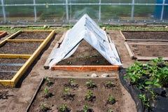 Trädgården delade in i sängar Arkivbild