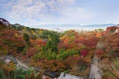 trädgården för lönn för härlig Momiji höst den färgrika på Kiyomizu-D Arkivbild