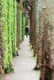 trädgården går Royaltyfria Bilder